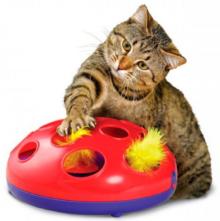 Výbava pro kočku – co pořídit nejen pro kotě?