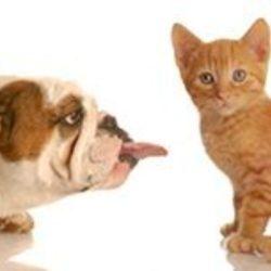 Pořídit si kočku nebo radši psa?
