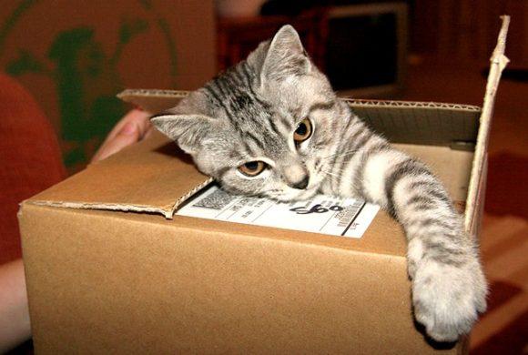 Jak přestěhovat kočku a zvyknout ji na nové místo?