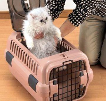 Jak na to: jak dát kočku do přepravky