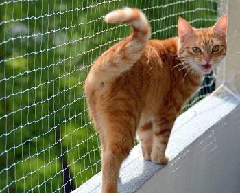 (Ne)bezpečí pro kočky