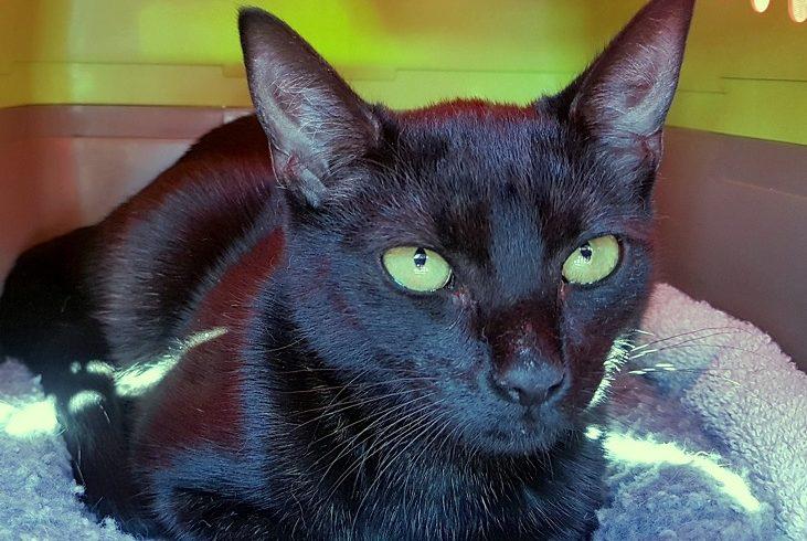 Kočička uvázaná k zábradlí