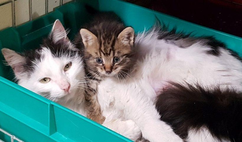 Miminko z batohu a adoptivní maminka
