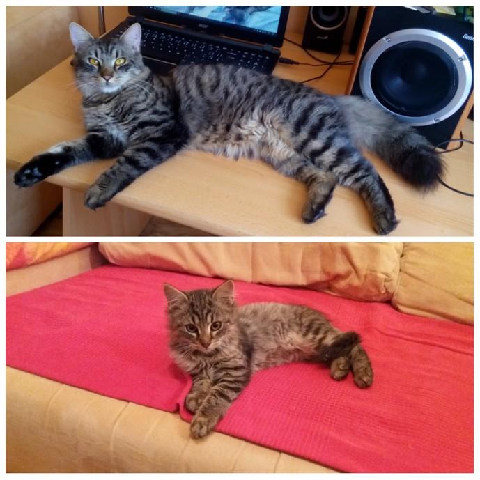 TIMUR (2 roky)