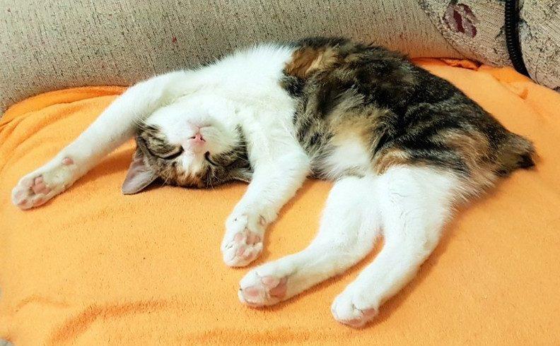 Stres u koček