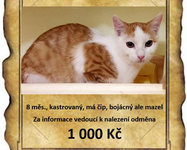 Ztratila se nám kočka, jak ji najít?