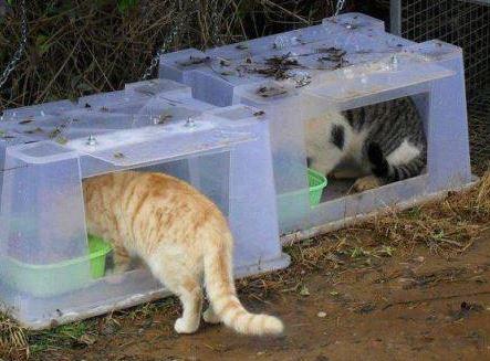 Musí se obce postarat o opuštěná zvířata?