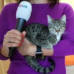 Reportáž TV Nova