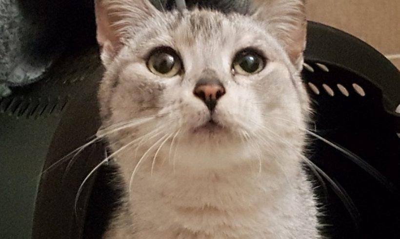 Nalezená kočička Komín