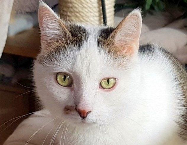 MIKI (6 let)