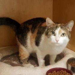 Veselí nad Moravou – nalezena kočka